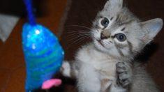 5 juegos que potencian la inteligencia en tu gato
