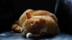Consejos para tener a tu gato en un piso pequeño