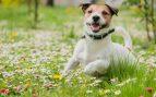 Perro entre plantas alergia