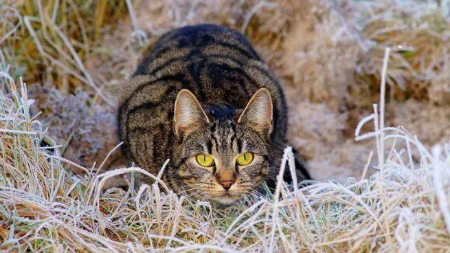 Técnica de tu gato para cazar