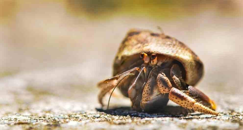 Curiosidades entre cangrejos y nécoras