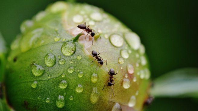 Comunidad en las hormigas
