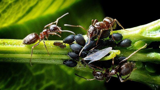 Comunidad hormigas