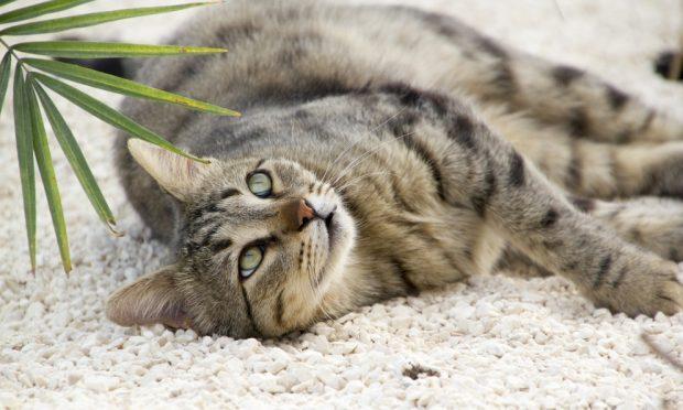 Cosas curiosas de tu gato