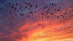 Alerta de las aves del cambio climático