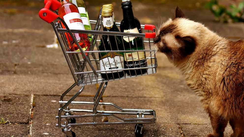 Efectos del alcohol en gatos