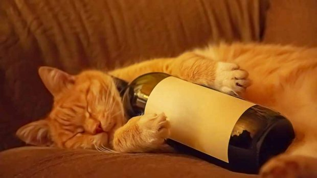 Alcohol en gatos