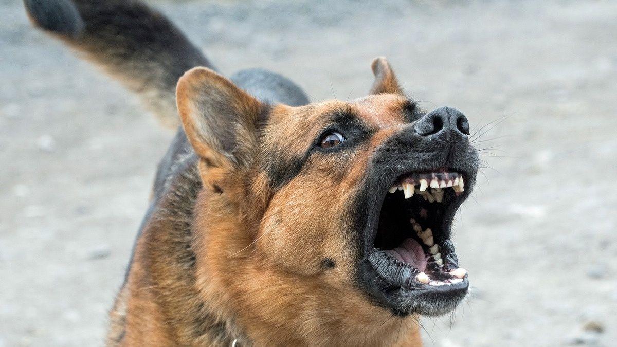 Agresividad perro