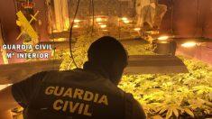 Plantación de marihuana. Foto: Archivo EP