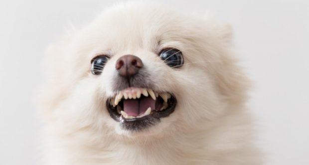 Perros agresivos por miedo