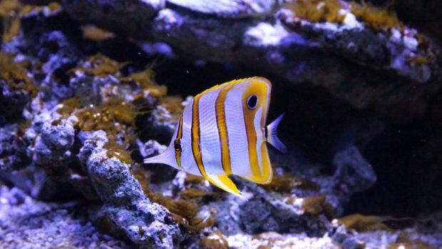 Animales en la profundidad del mar
