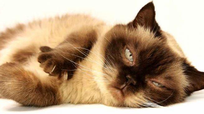 enfermedad común en gatitos