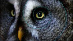Curiosidades: biomímesis con animales