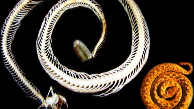 Biomímesis con animales
