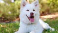 ¿Qué es elreconocimiento facial para mascotas perdidas?