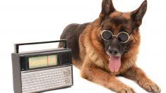 Cadenas de radio para perros