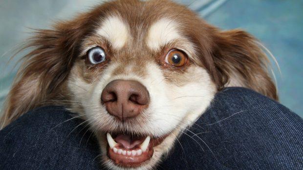 ¿Qué es el reconocimiento facial de mascotas?