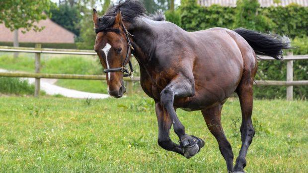 Células madre en caballos