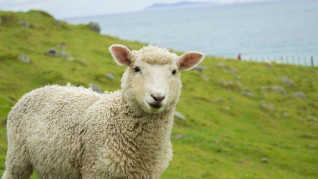 Clonación oveja Dolly