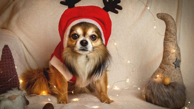 Dulces Navidad perros