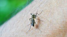 Los mosquitos pican a algunas personas