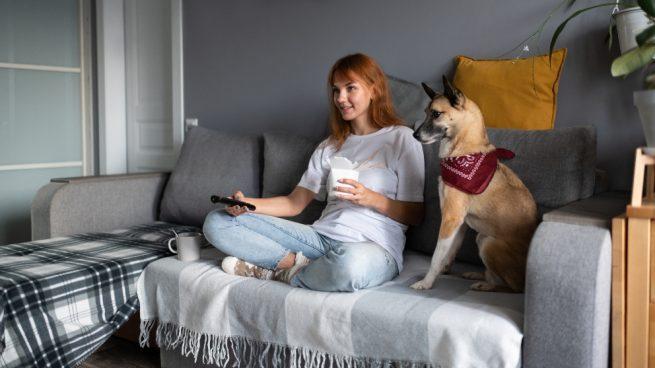 Perro mira la televisión