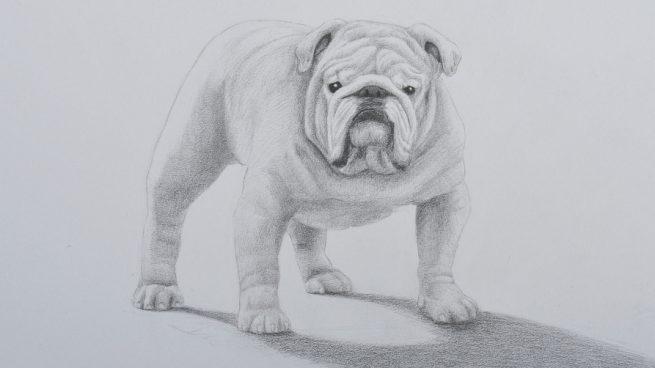 ¿Cómo dibujar a tu mascota?