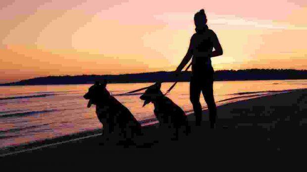 ¿Qué es humanizar a tu mascota?