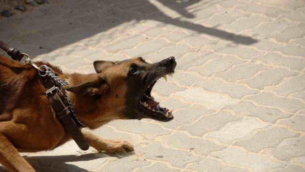 ¿Cómo reeducar a perro agresivo?