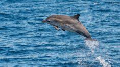 ¿Por qué saltan los delfines