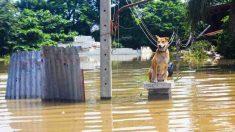 Cuidados de tu mascota en catástrofes