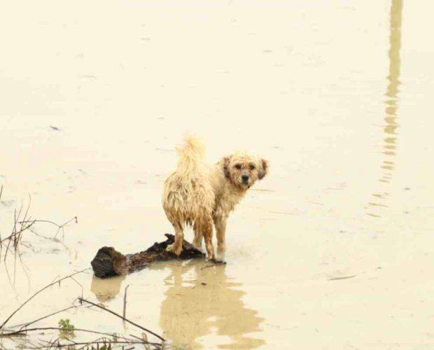 Mascota en inundaciones y otras catástrofes