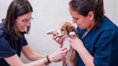 Un chequeo veterinario a tu mascota