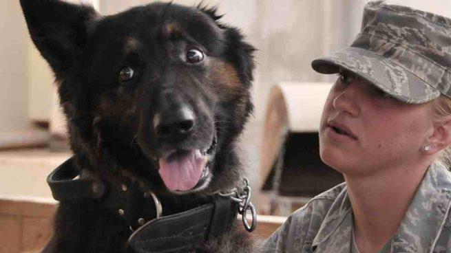 Perro con mujer soldado