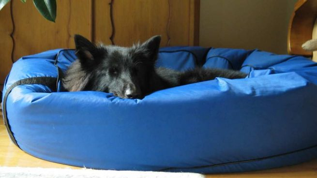 ¿Cómo duerme tu perro?