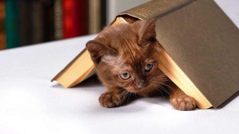 Preparativos para la llegada de un gato