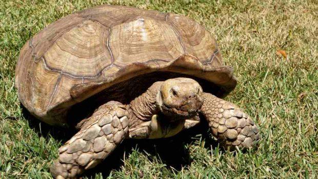 ¿Cómo es el caparazón de la tortuga?