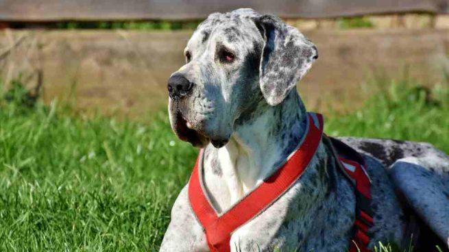 ¿Qué es el Síndrome de Wobbler en perros?