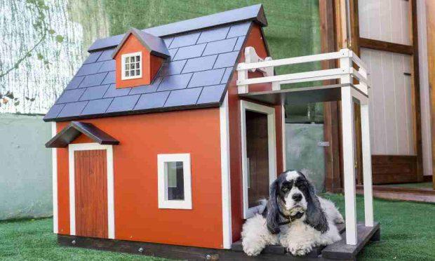 Decoración de la casa de tu perro