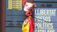 La cabeza de cerdo y la bandera de España colocada por los CDR en la sede de ERC en Solsona.