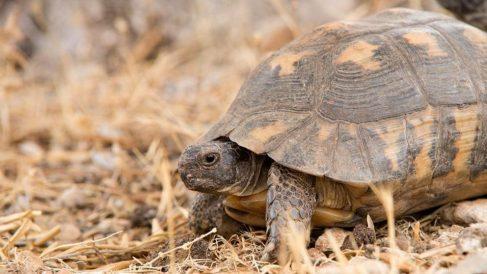 Qué come la tortuga de tierra