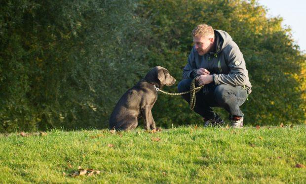 Perro depende emocionalmente de dueño