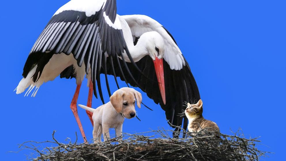 Hacerse socio de protectora de animales