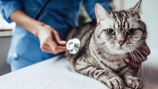 La neonatología veterinaria