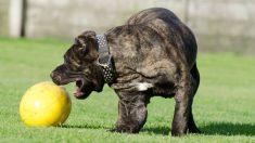 ¿Cómo mantener la salud mental de tu mascota?