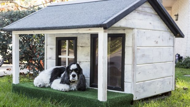 Consejos para construir una caseta perro