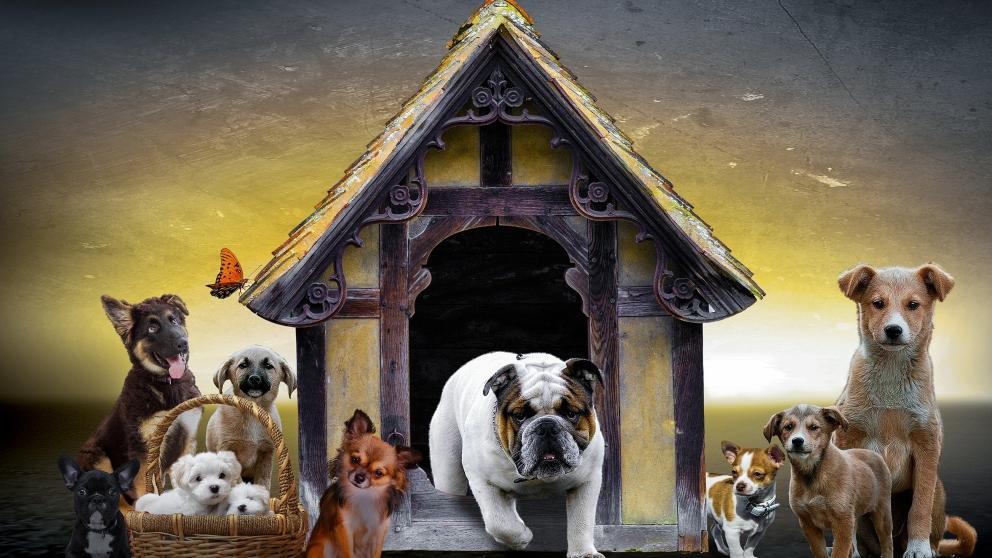 Tips para construir una casa para tu perro