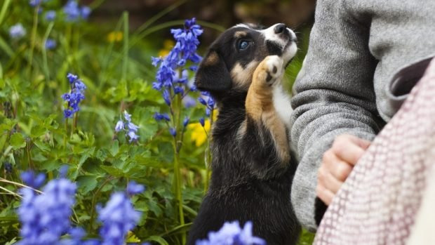 Plantas no recomendadas para cachorros de perros