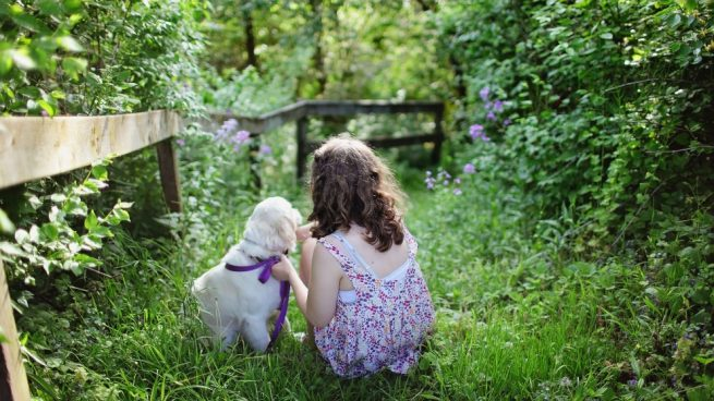 Plantas con riesgo para cachorros