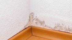 La humedad supone un gran problema en el hogar
